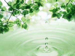 hijau